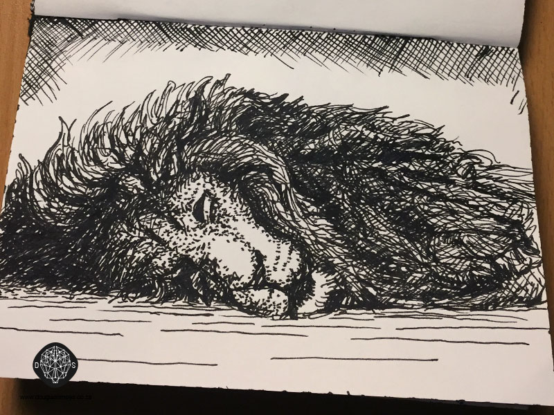 sleeping animal sketches